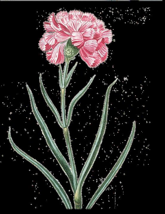 flower-1858883_960_720